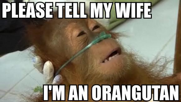 pleasetellmywifeimanorangutan